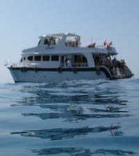 Diving in the Red Sea in Egypt